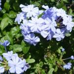 30 Day Snap #12 Purple Flowers