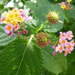 30 Day Snap #2 Tómate un tiempo para oler las flores…